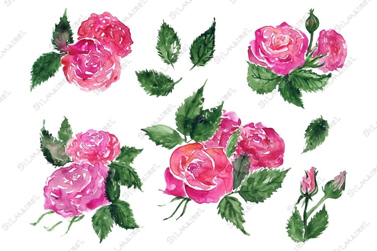 Watercolor pink red rose flower green leaf plant hand drawn example image 1