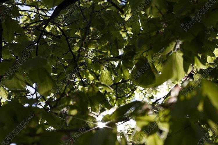 tree foliage example image 1