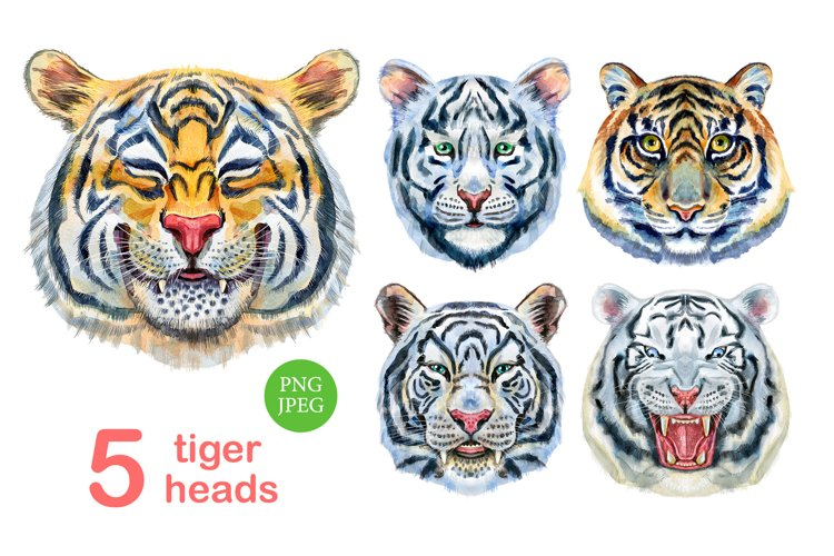 Watercolor tiger portraits example image 1