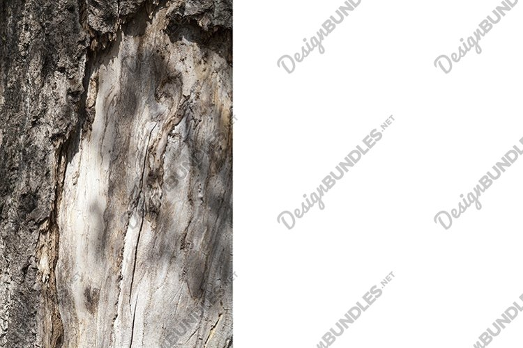 the bark of a tree example image 1