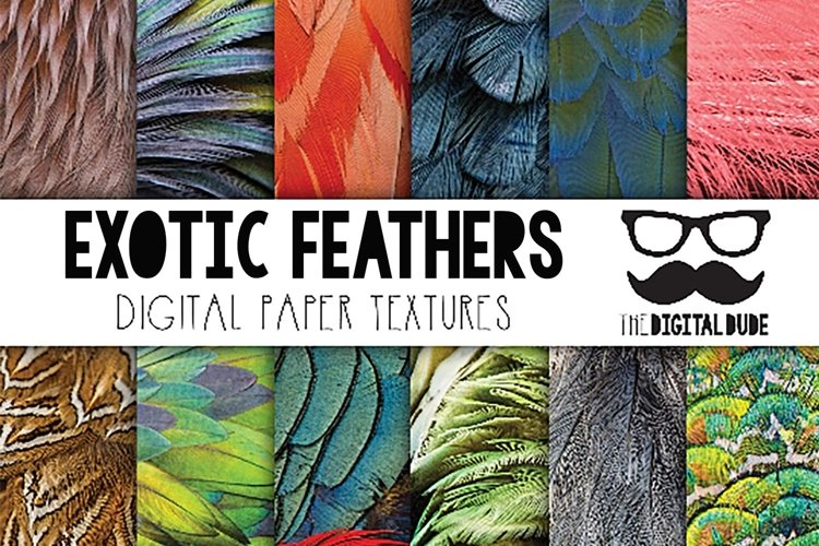 Exotic Feathers - Digital Paper Set of 12 Images example image 1