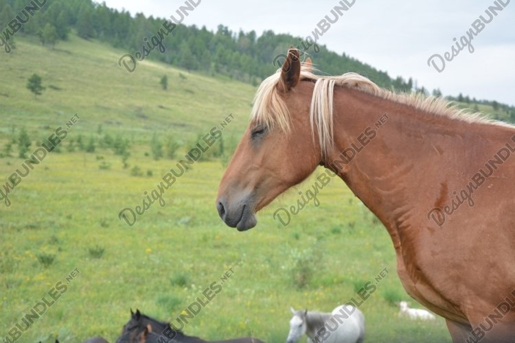Horses in the steppe Bundle - 4 photos