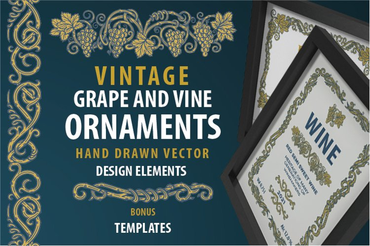 Grape and vine vintage style hand drawn ornaments.