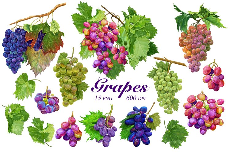 Grapes clipart, Grapes drawing, Food clipart, Fruit clipart