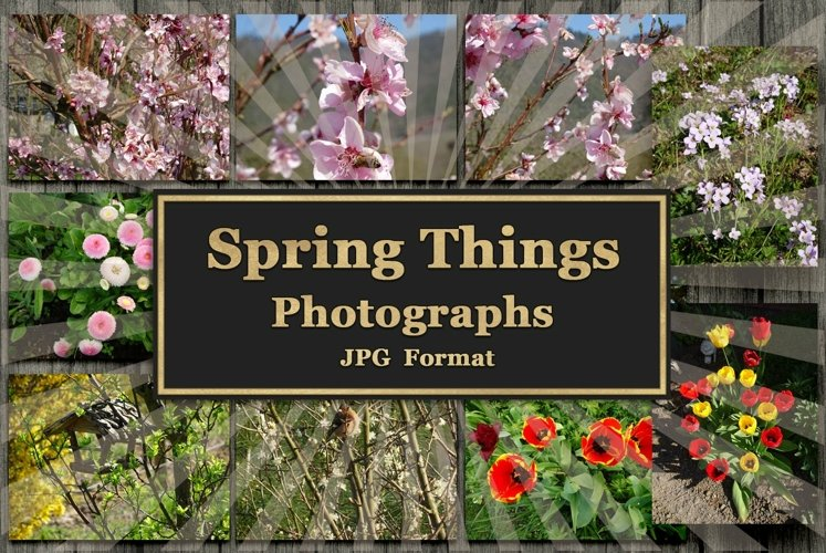 Spring Things Photogrraphs