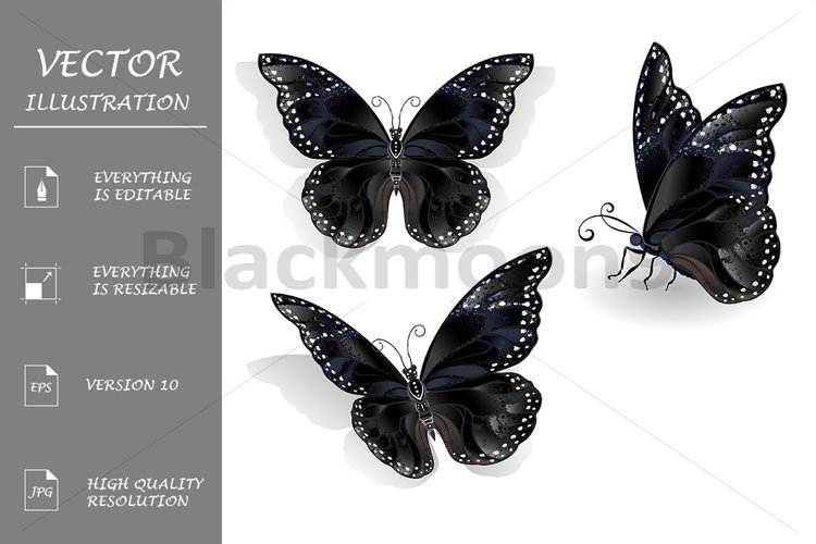Set of Black Butterflies Morpho example image 1