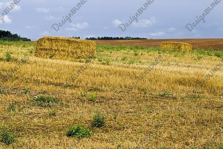 harvesting wheat example image 1
