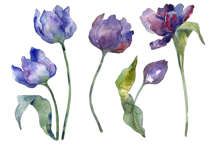 Tulips blue Watercolor png example image 1