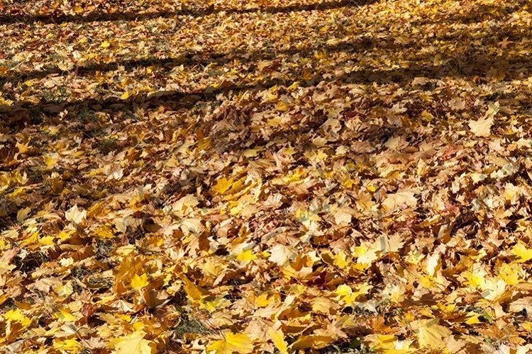 fallen leaves. example image 1