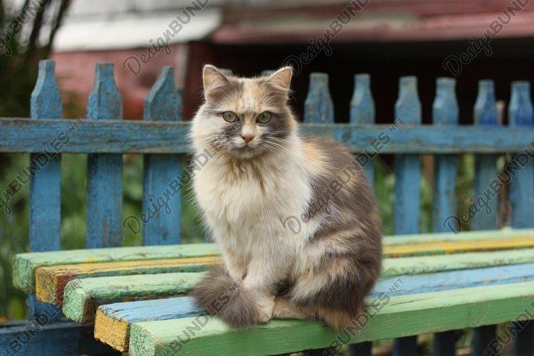 Tri-color cat example image 1