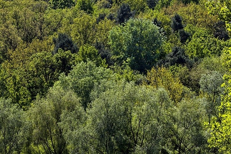 lonely growing trees with green foliage in the summer example image 1