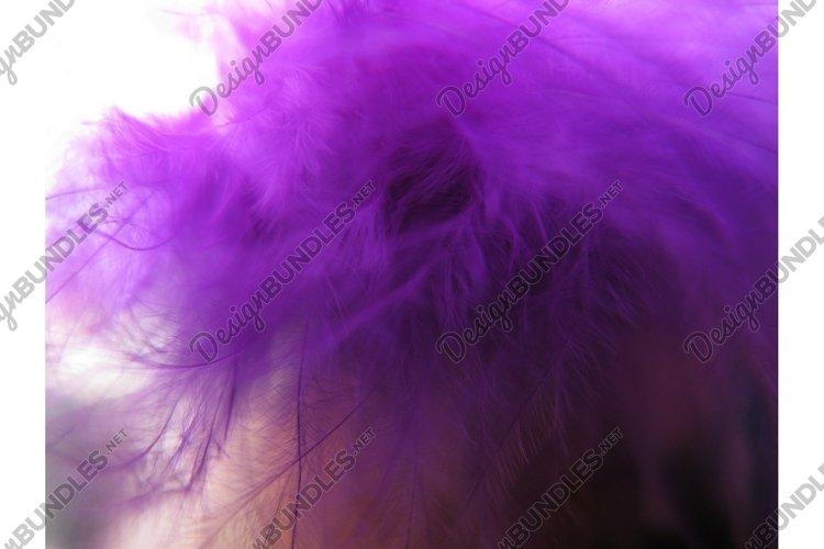 Violet bird feathers decoration background macro photo example image 1