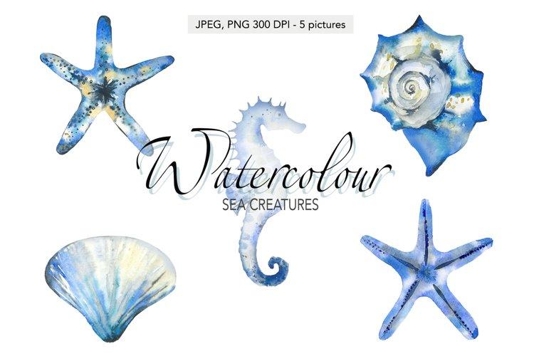 Seashells Starfish Seahorse Ocean animals Sea animals
