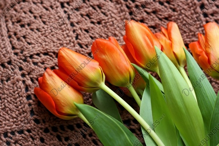 Tulips close-up. example image 1