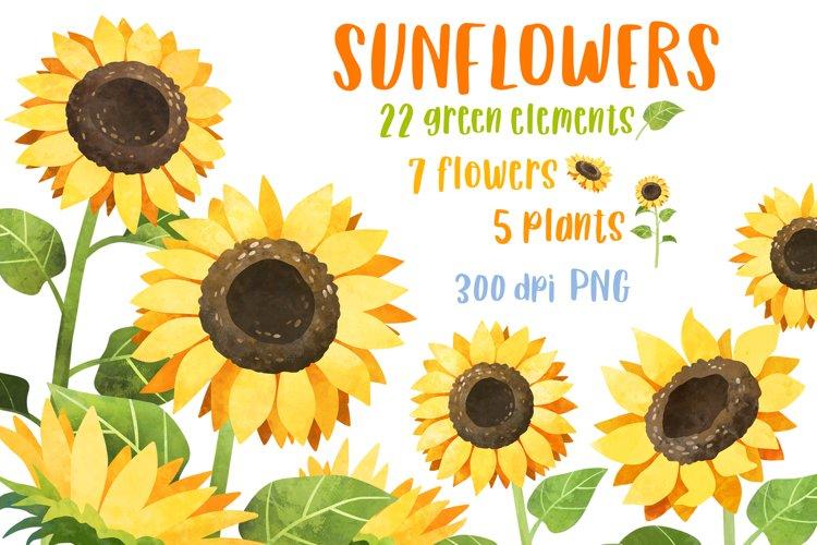 Sunflower clipart Watercolor flower clipart Sublimation png