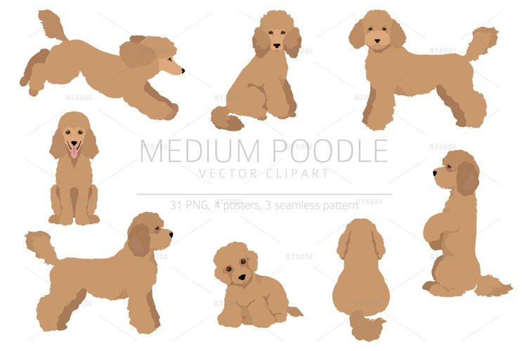 Medium poodle clipart