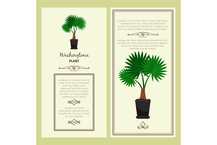 Greeting card with washingtonia plant example image 1