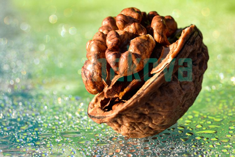 Walnut. Light green background. Macro. example image 1