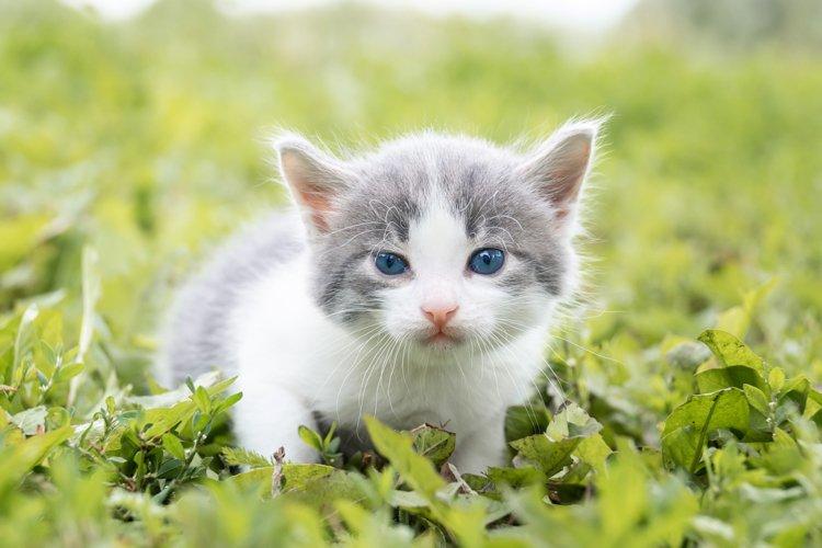 kitten on the grass example image 1