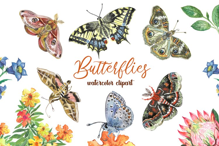 Butterfly clipart watercolor. Summer clipart with flowers
