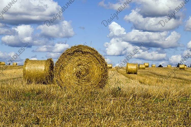 agricultural field after harvesting example image 1
