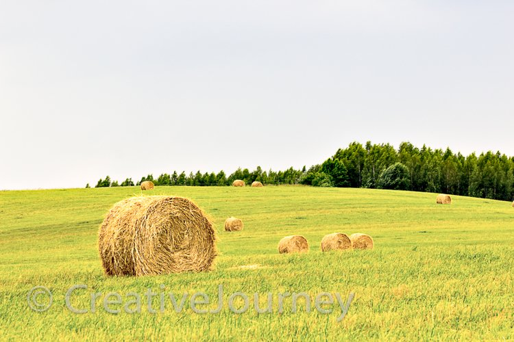 Summer field background. example image 1