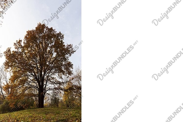 Park in the autumn example image 1
