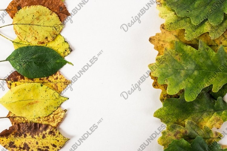 autumn leaves, gradient of nice colors example image 1