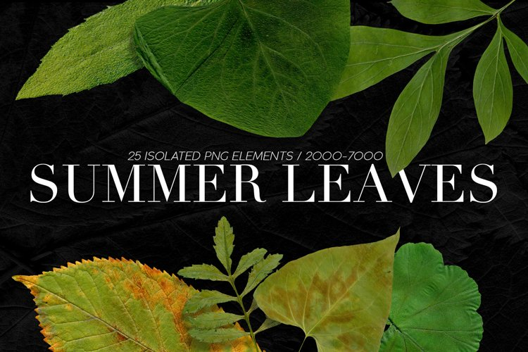 25 Isolated Summer Leaves example image 1