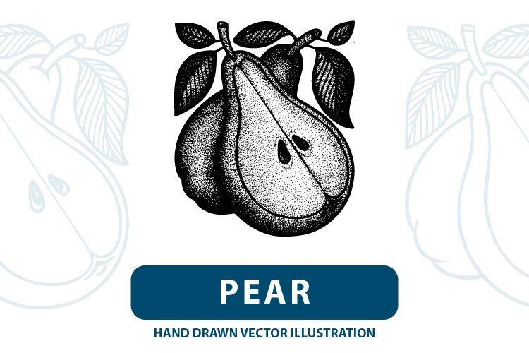 Pear hand drawn vintage style vector illustrations. example image 1