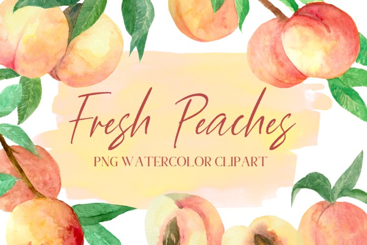 Peach Branches Botanical Watercolor Fruit PNG Clipart