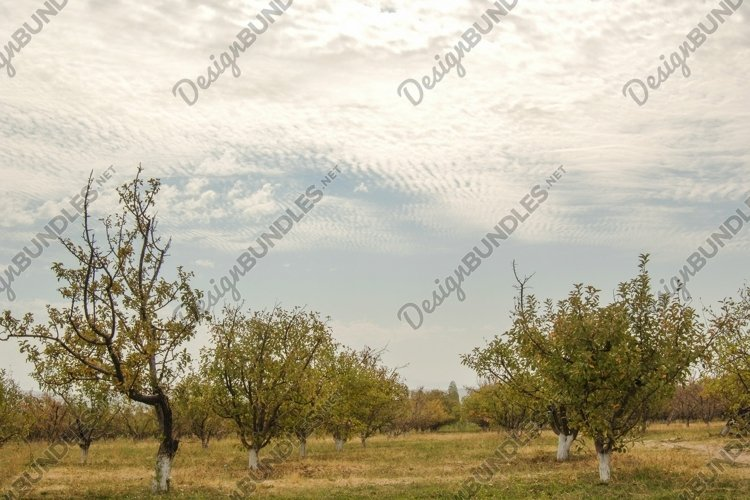 Garden with fruit trees against the sky with clouds example image 1