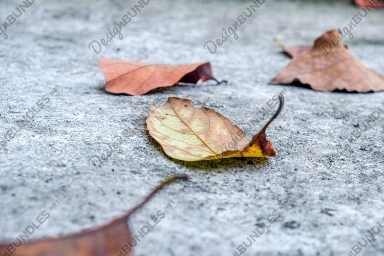 Stock Photo - Withered Leaves example image 1