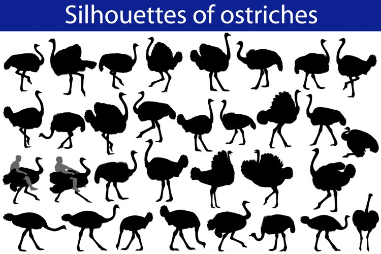 Silhouette of ostrich example image 1