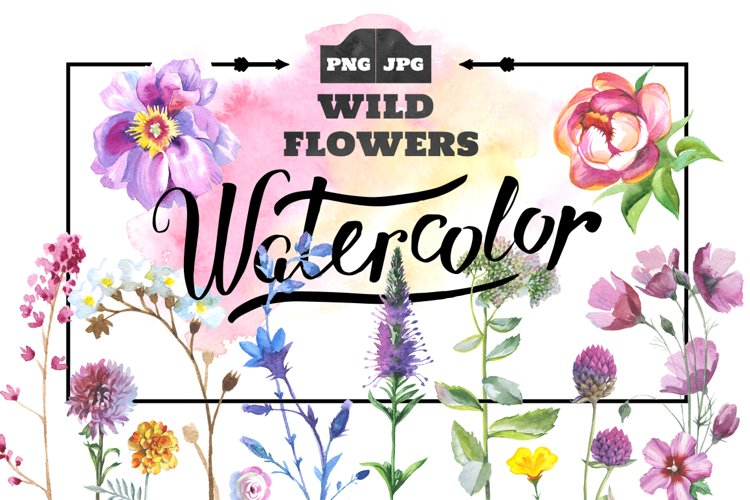 Wild Flowers watercolor PNG clipart