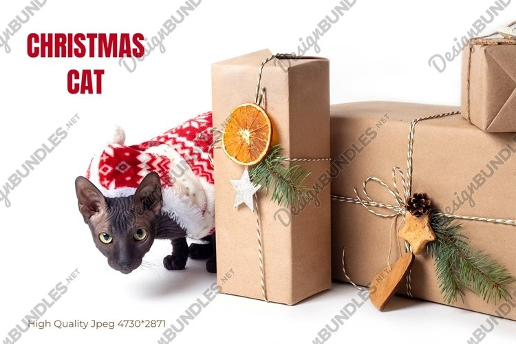 Christmas banner with a cat and eco friendly gifts