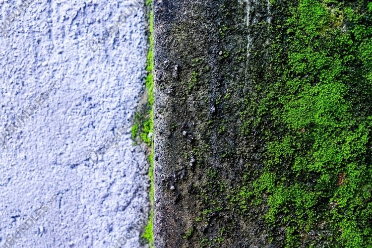 Stock Photo - Moss example image 1