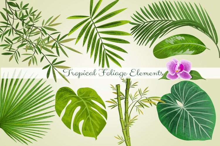 Tropical Foliage PNG Graphic Elements and Digital Paper example image 1