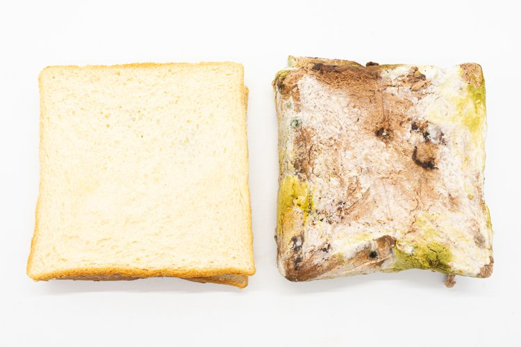 good bread side and moldy bread