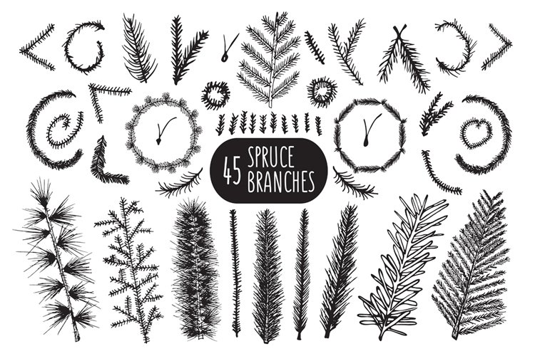 45 Hand Drawn spruce branches