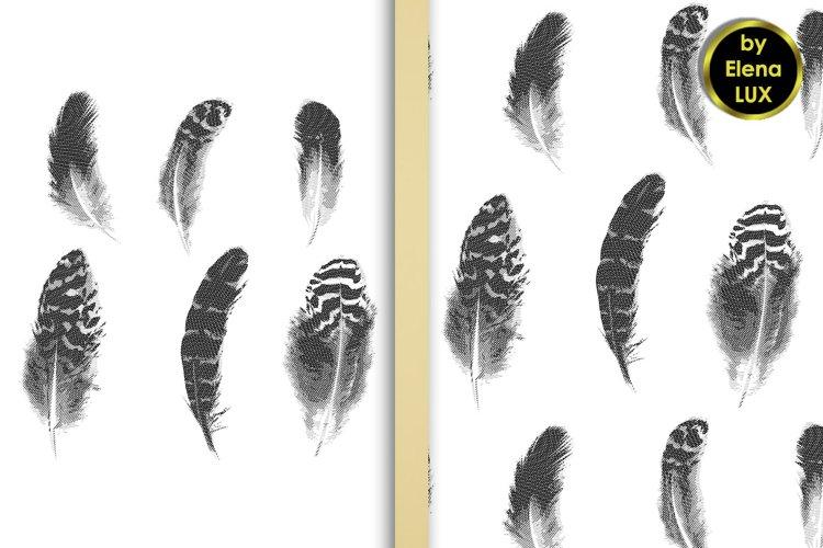 Hatching feathers set and seamless pattern