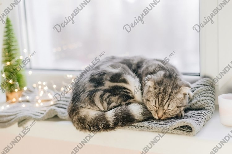 Scottish fold cat sleeps on a windowsill on a winter day example image 1