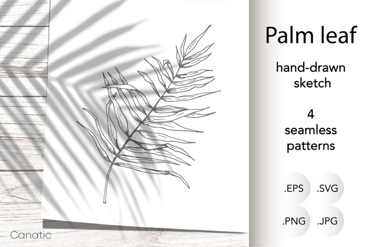 Palm leaf. Hand-drawn sketch and seamless patterns with it. example image 1