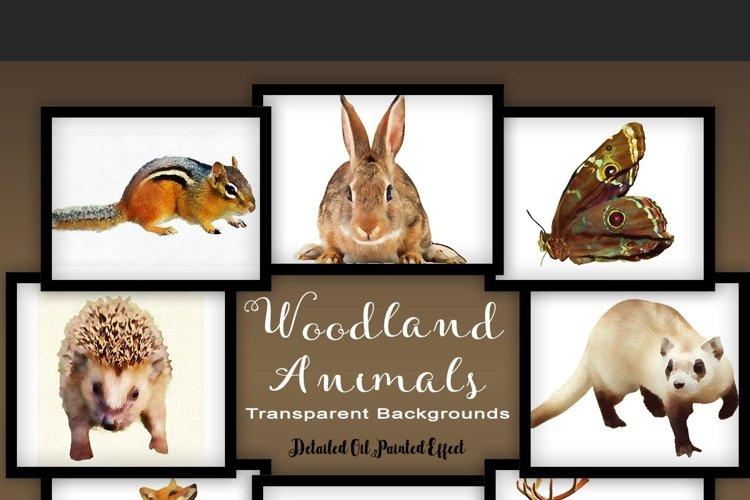Woodland Animal Set V2 example image 1