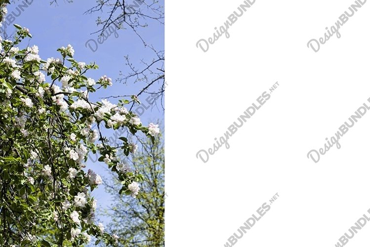 kinds of trees example image 1