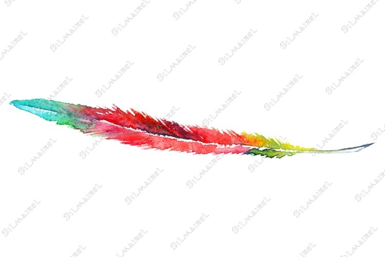 Watercolor colorful rainbow parrot feather vector isolated example image 1
