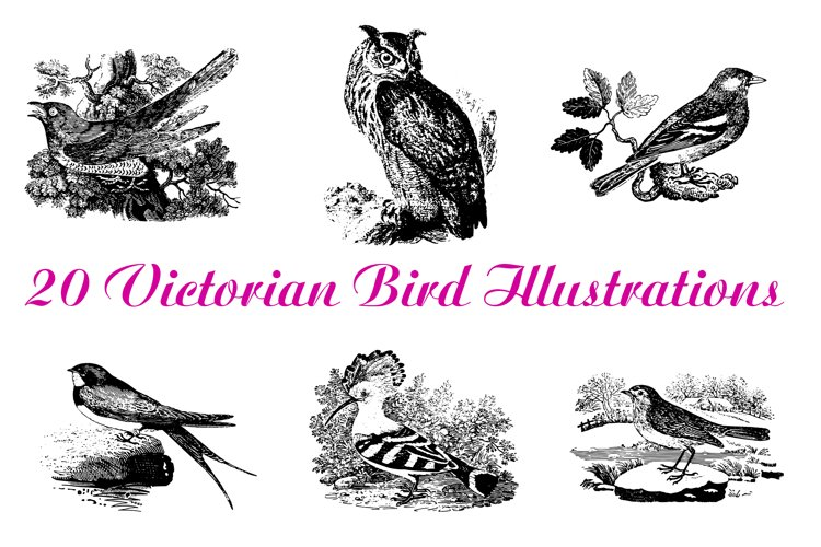 20 Vintage Bird Illustration Collection