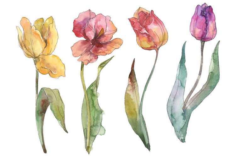 Assorted tulip bouquet Watercolor png example image 1