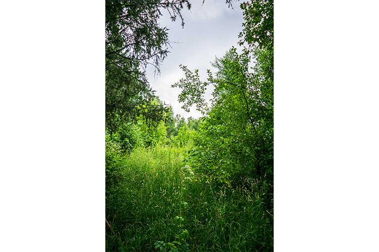 Stock Photo - Landscape summer day in the forest. example image 1