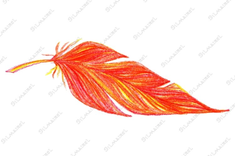 Red orange yellow bird feather vector single isolated example image 1